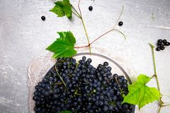 Red wine grapes in silver tray on grey background. Top view. Copy space. Stock Photography