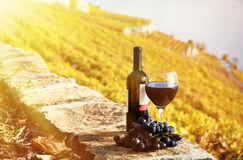 Red wine and grapes. On the terrace vineyard in Lavaux region, Switzerland Stock Photos