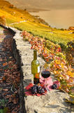 Red wine and grapes. Terrace vineyards in Lavaux. Royalty Free Stock Photography