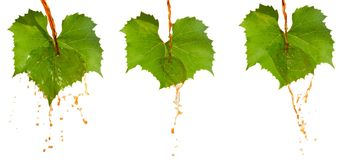Red wine and leafs Stock Photography