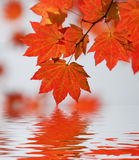 Red wine maple abstract Stock Photo