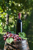 Red wine Royalty Free Stock Images