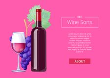 Red Wine Sorts Web Page on Vector Illustration. Red wine sorts web page with text and headline sample, images of bottle, grapes with leaves and glass vector Stock Photos
