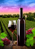 Red wine and vineyard Royalty Free Stock Photo