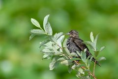 Bird perched with blurred green background stock images