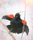 Red Winged Blackbird Watercolor Royalty Free Stock Image