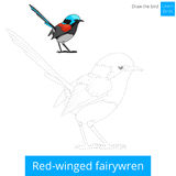 Red winged fairywren bird learn to draw vector Royalty Free Stock Photos