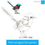 Red winged fairywren bird learn to draw vector Royalty Free Stock Photo