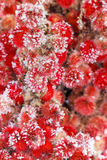 Red Winter Vegetation Royalty Free Stock Photos