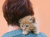 Red woman and kitten. The red kitten sits on the should Royalty Free Stock Image