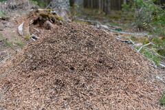 Free Red Wood Ant Mound Or Anthill Stock Photo - 192553310