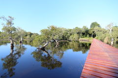 Red wood bridge reflection water. In Thailand Royalty Free Stock Images