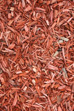 Red woodchips as background. Stock Image
