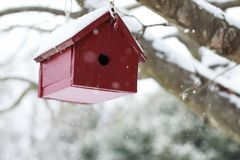 Red Wooden Bird House hanging from a tree branch in the falling. Snow Stock Photo