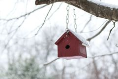 Red Wooden Bird House hanging from a tree branch in the falling. Snow Royalty Free Stock Photography