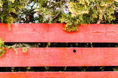 Red wooden fence juniper Stock Photography