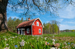 Red wooden house in Sweden in spring. Typical red painted wooden house in Småland, Sweden in spring. Wonderful fresh colors, low angel point of view Royalty Free Stock Photos