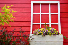 Red wooden wall with white window decorated with Geranium flowers. Fell fresh Royalty Free Stock Image