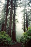 Red woods in green Royalty Free Stock Photo