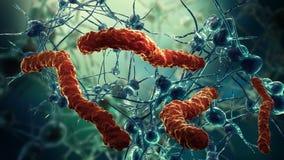 Red y virus de la célula nerviosa Fotografía de archivo libre de regalías