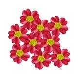 Red Yarrow Flowers or Achillea Millefolium Flowers Stock Images