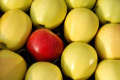 Red and yellow apples Stock Photo