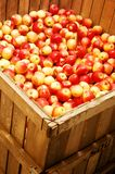 Red and yellow apples stock photography