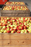 Red and yellow apples in crates Stock Photos
