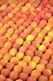 Red-Yellow Apples. Harvested red-yellow apples arranged nicely on natural soil Royalty Free Stock Photo