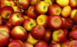 Red and yellow apples. Lots of red and yellow apples, fresh and healthy, vegan royalty free stock images