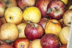 Red and yellow apples, natural view. Stock Photo