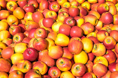 Red and yellow apples for sale Royalty Free Stock Photo