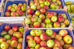 Red and yellow apples for sale Stock Photography