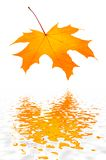 Red-yellow autumn leaf. Red-yellow autumn leaf leaning over water royalty free stock photos