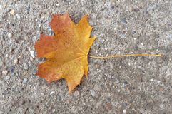 Red and yellow autumn leaf from tree on cement background. Yellow dry leaf Royalty Free Stock Image