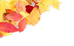Red and yellow autumn leaves frame Royalty Free Stock Photography