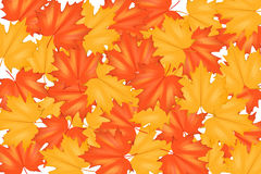 Red and Yellow Autumn Leaves Pattern Stock Images