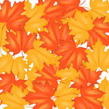 Red and Yellow Autumn Leaves Pattern Royalty Free Stock Photo