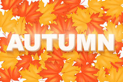 Red and Yellow Autumn Leaves Pattern Stock Photo