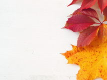 Red and yellow autumn leaves upon white wooden background Stock Photography