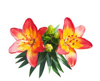Red-yellow beautiful lily bouquet on a white background Stock Images