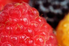 Red, Yellow and Black Raspberry Macro Stock Images