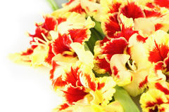 Red and yellow bright gladiolus  horizontal  isolated Royalty Free Stock Photo