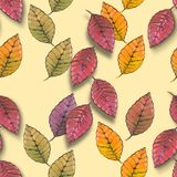 Autumn leaf. Red, yellow, brown autumn leaf Royalty Free Stock Photos