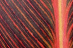 Red, yellow, brown striped plant leaf macro background Stock Images
