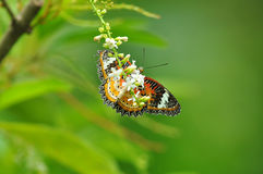 Red yellow butterfly. On flower of Thailand background Stock Photos