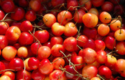 Red and Yellow Cherries Bunch. Closeup of a flat of Red and Yellow Rainier cherries Royalty Free Stock Images