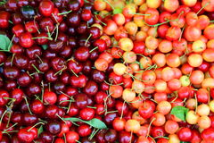 Red and yellow cherries Royalty Free Stock Photos