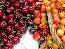 Red and Yellow Cherries Stock Images