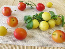 Red and yellow cherry plums Stock Images